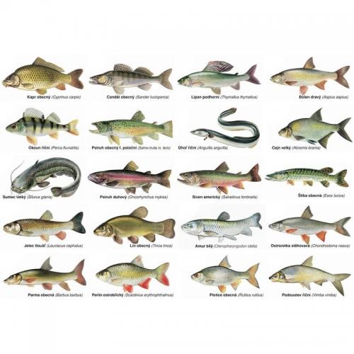 Magnetky s rybami 20ks