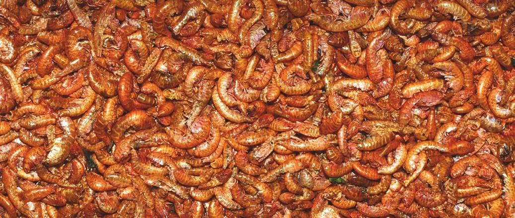 Přírodní krmivo krevety 1,5-2 cm Přírodní krmivo krevety 1,5-2 c